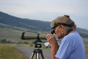 Lil Erickson, founder of the Western Sustainability Exchange, watching grizzlies in a valley north of Yellowstone Park.